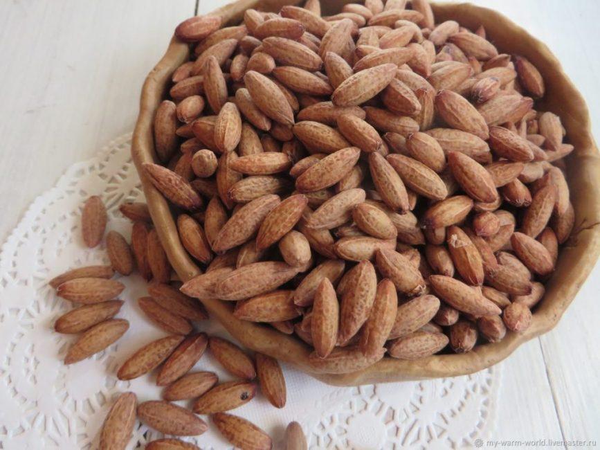 Очищенные и высушенные семена кизила