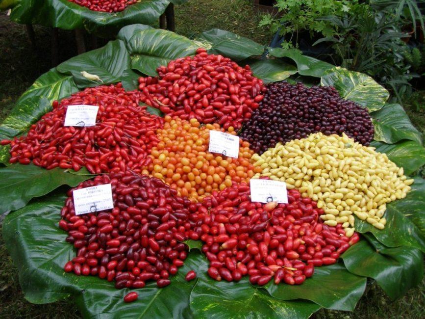 Плоды разных сортов кизила