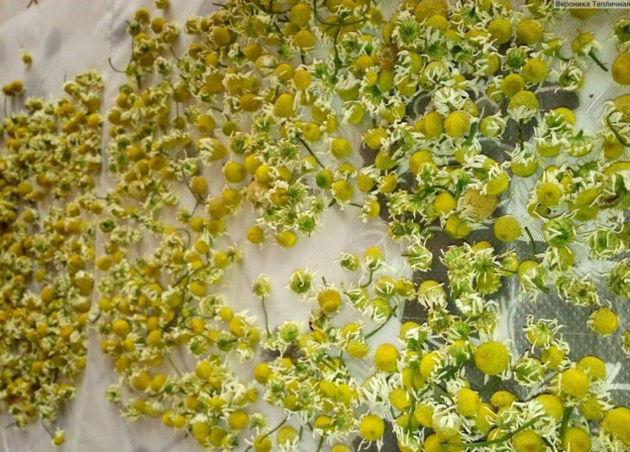 Получение семян растения