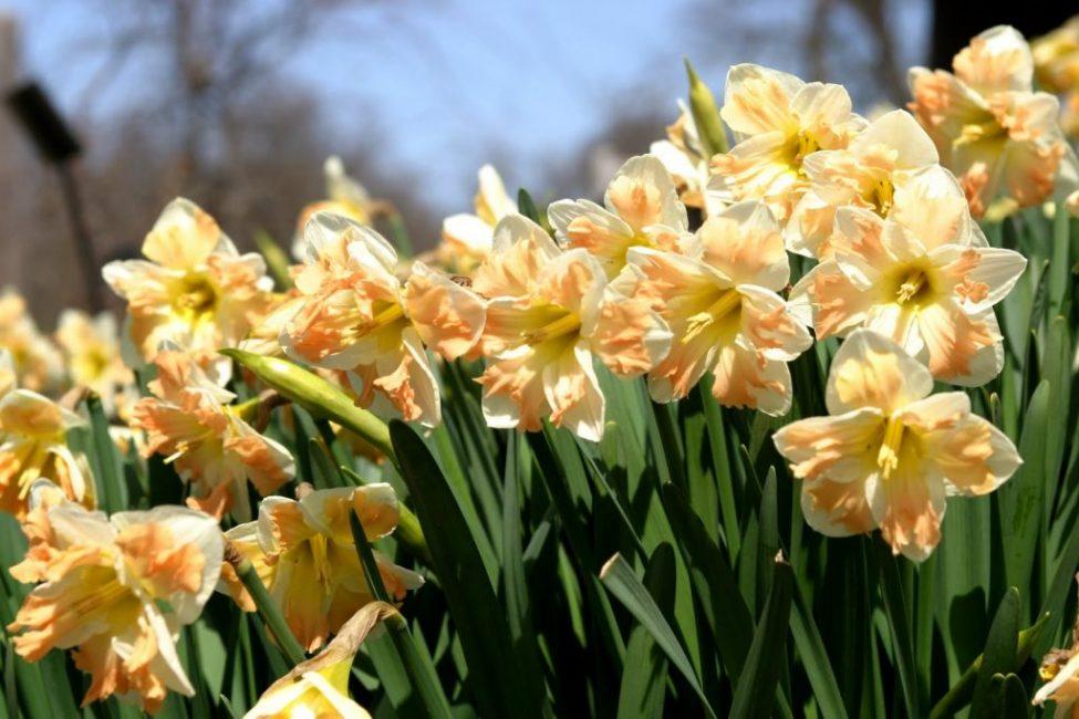 После окончания цветения растение нуждается в не меньшем уходе, чем во время него