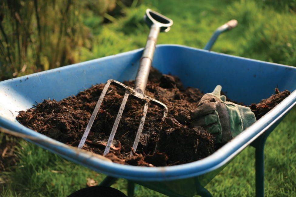 Правильно подобранная подкормка усилит цветение и активизирует рост растения