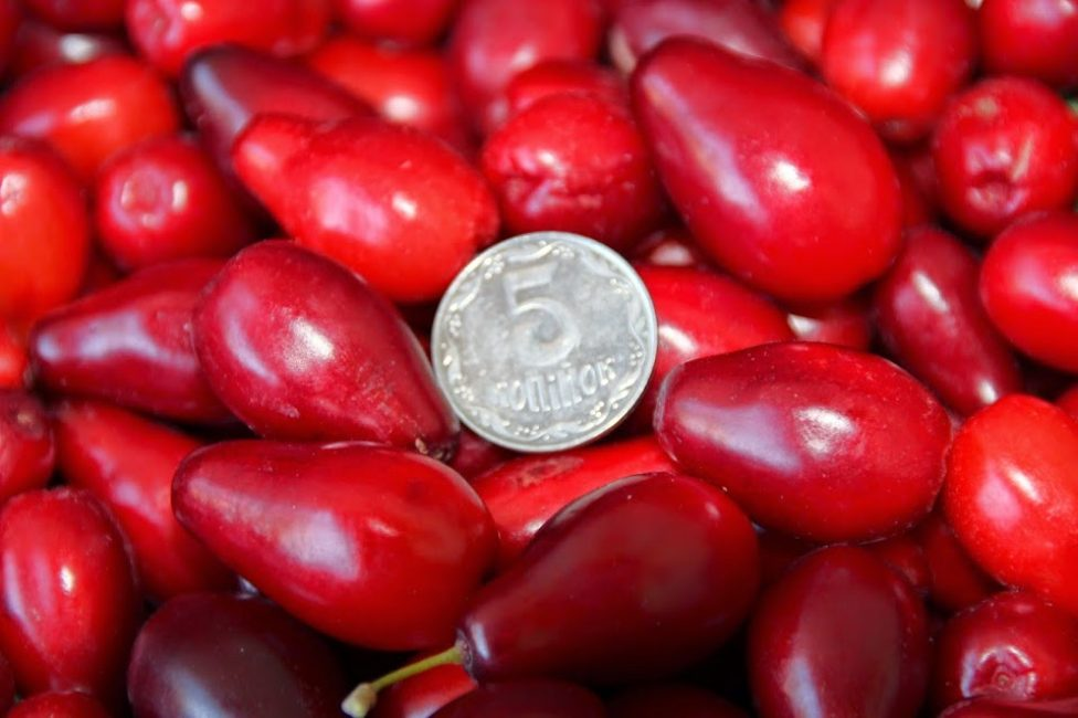 Размеры плодов кизила