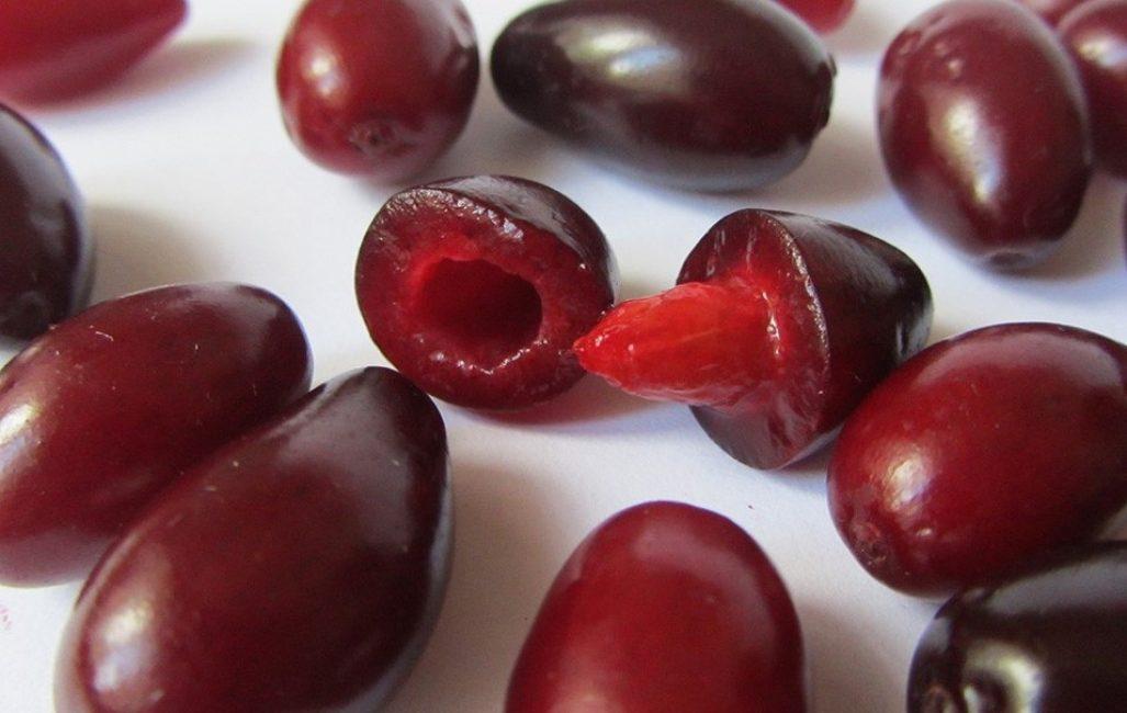 Семена кизила в плодах