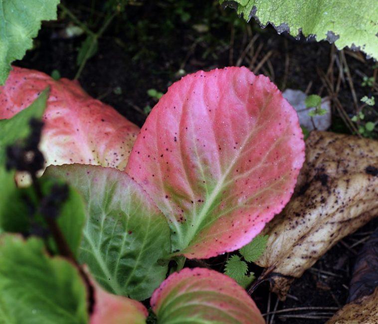 Чтобы определить болеет ли растение, нужно осмотреть его листья