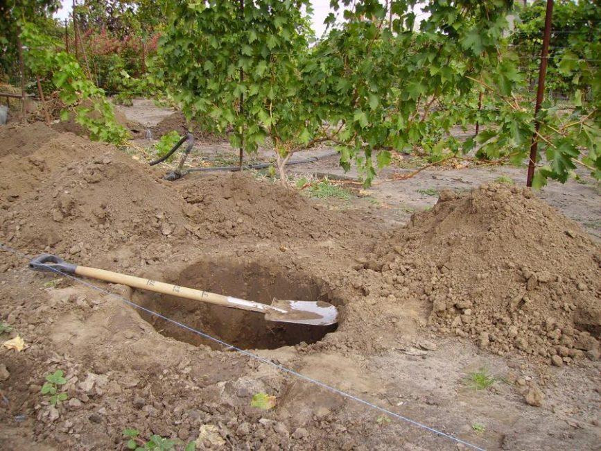 Яма для посадки растения