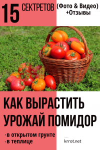 15 секретов как вырастить хороший урожай помидор в открытом грунте и в теплице (Фото & Видео) +Отзывы
