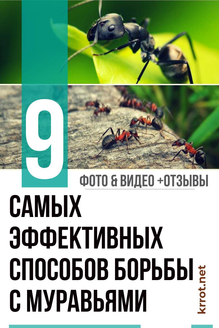 Борьба с муравьями на огороде