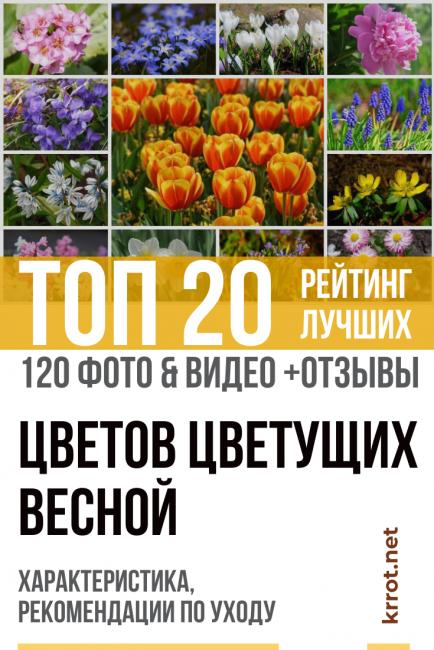Цветы - растущие весной