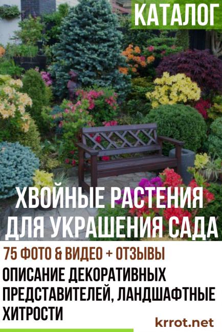 Каталог хвойных растений для украшения вашего сада