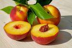 сорта персиков описание