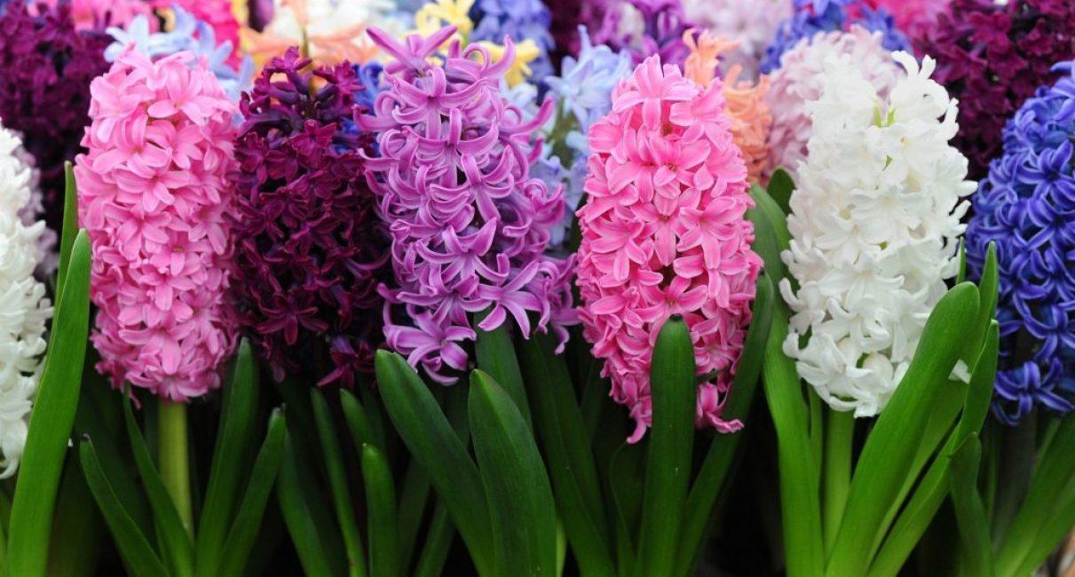 Разноцветные цветы растения