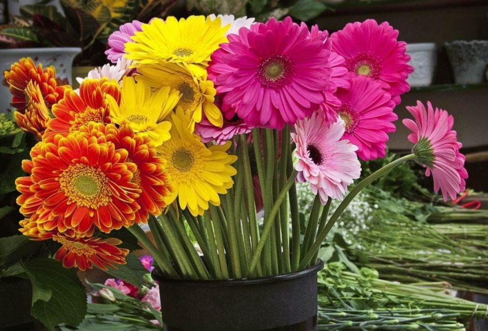Сортовое разнообразие цветка