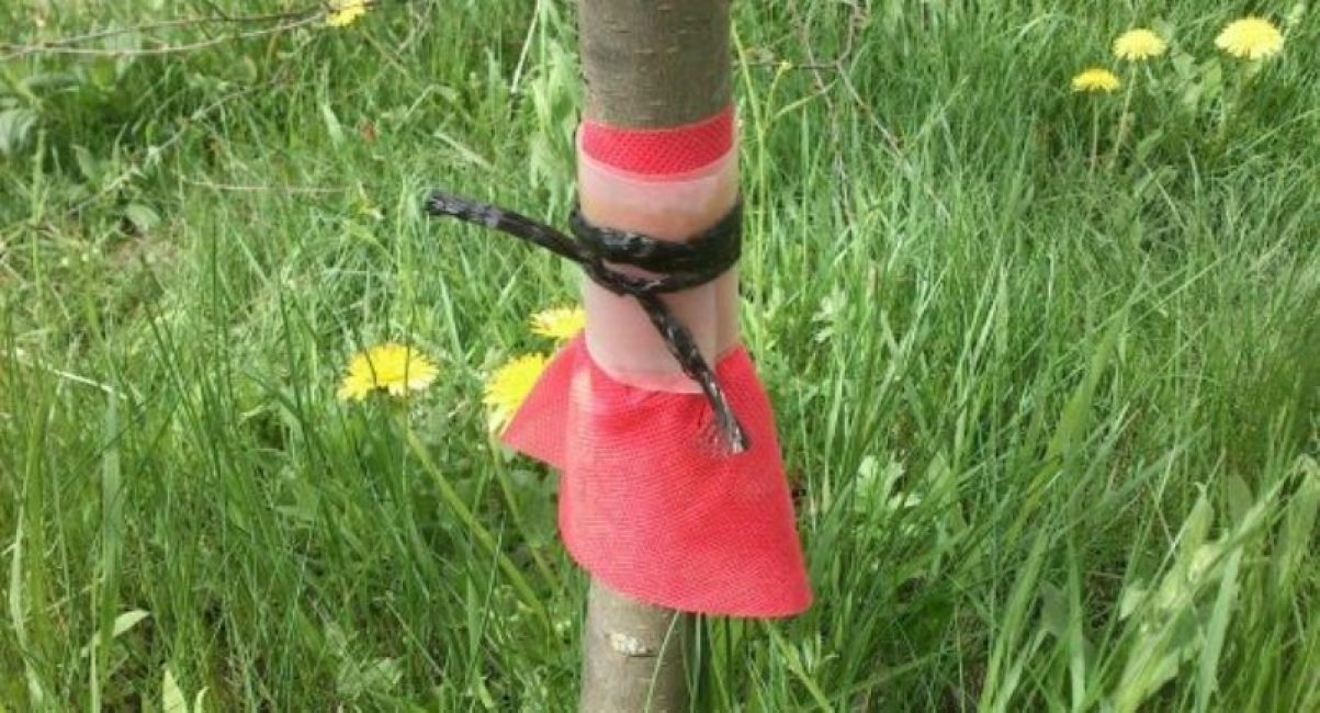 Юбочка на стволе дерева