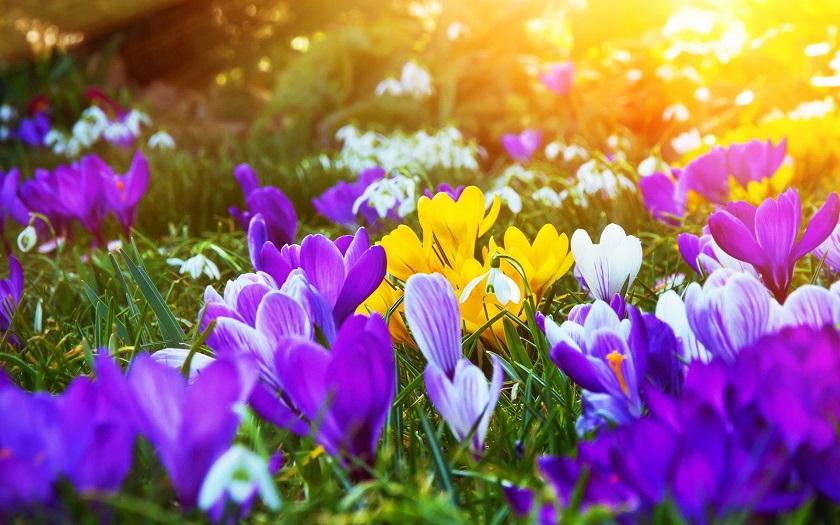 цветы цветущие весной