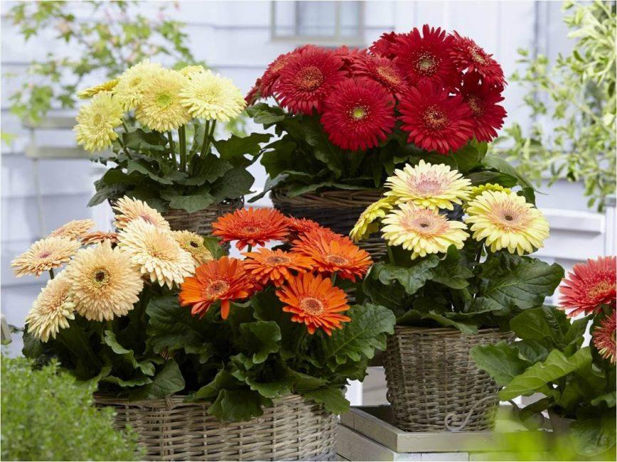 Различные виды цветка