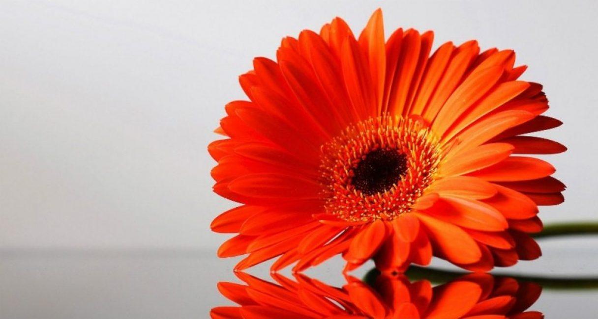 Цветок перед засушкой