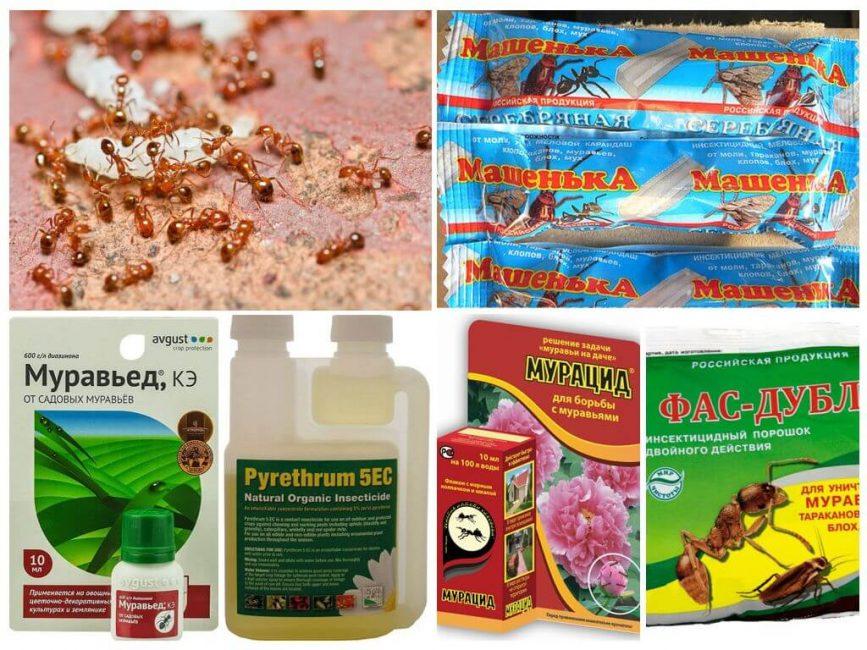 Химические средства от муравьев