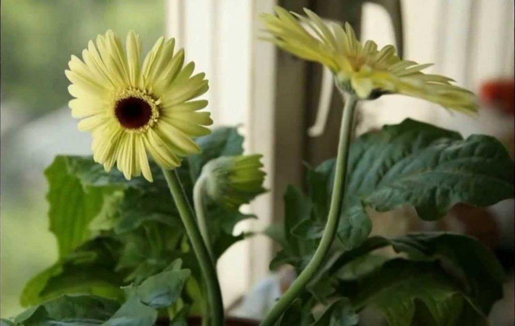 Цветок на подоконнике