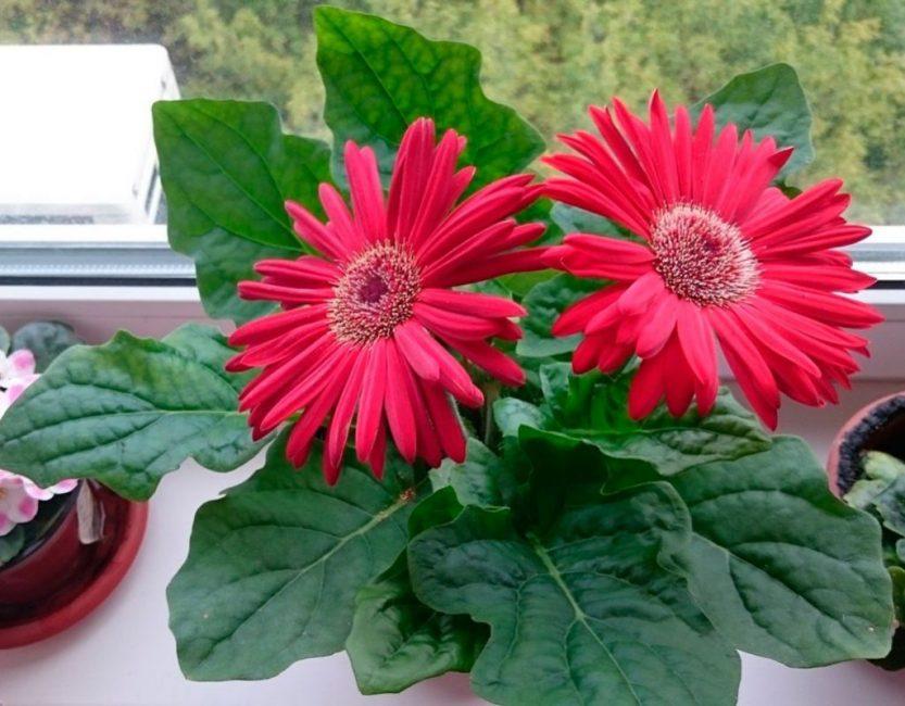 Здоровый цветок
