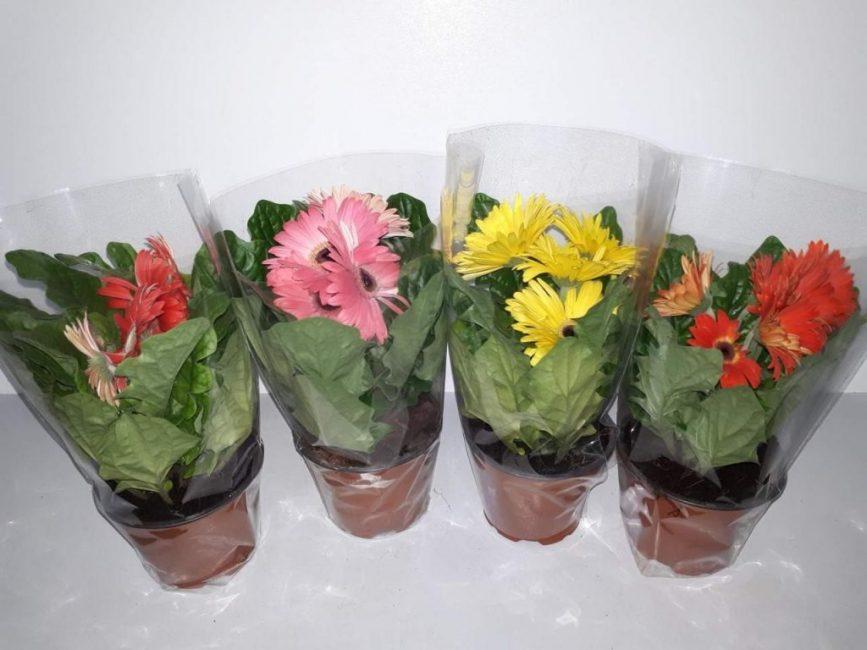 Купленные растения