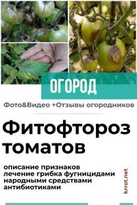 Фитофтороз томатов: описание признаков, лечение грибка фунгицидами, антибиотиками и народными средствами (15 Фото & Видео) +Отзывы