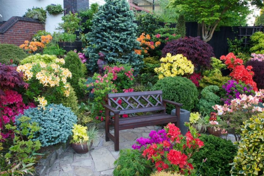 Хвойные растения для сада фото и названия – энциклопедия