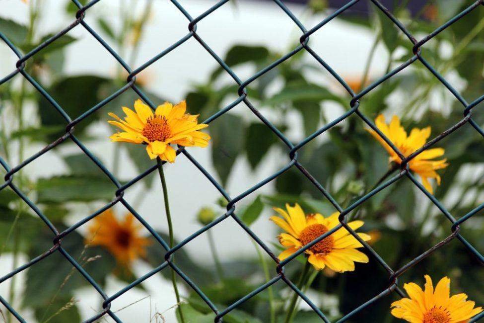 Забор из рабицы