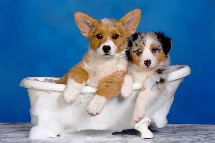 Лучший шампунь для собак