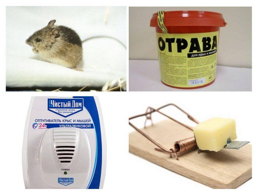 Средства для борьбы с мышами