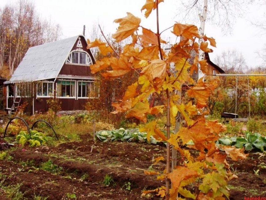Огород осенью