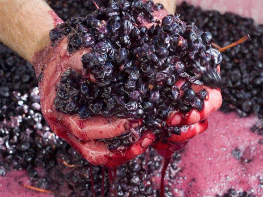 Из сохранившегося виноградного жмыха можно изготовить легкий, слабоалкогольный напиток