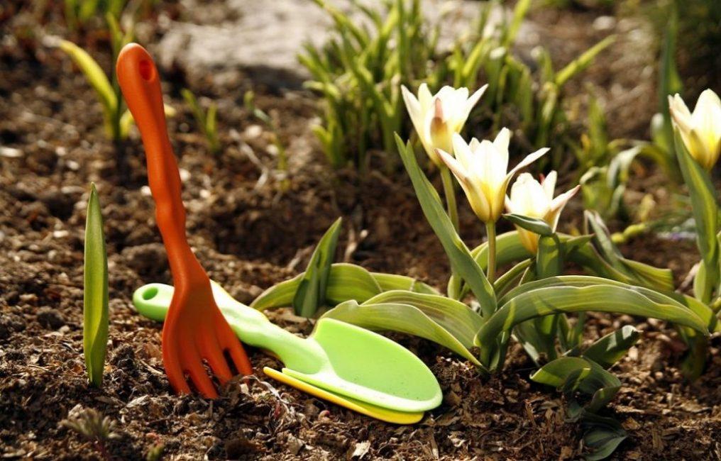 Проросшие цветы