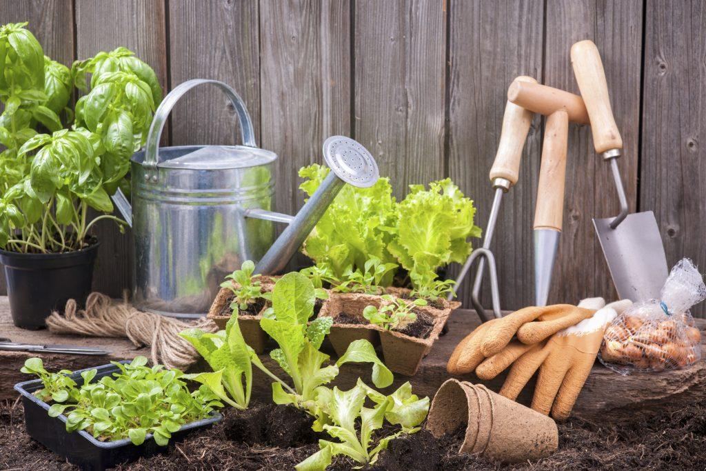 календарь садовода и огородника на 2019 год