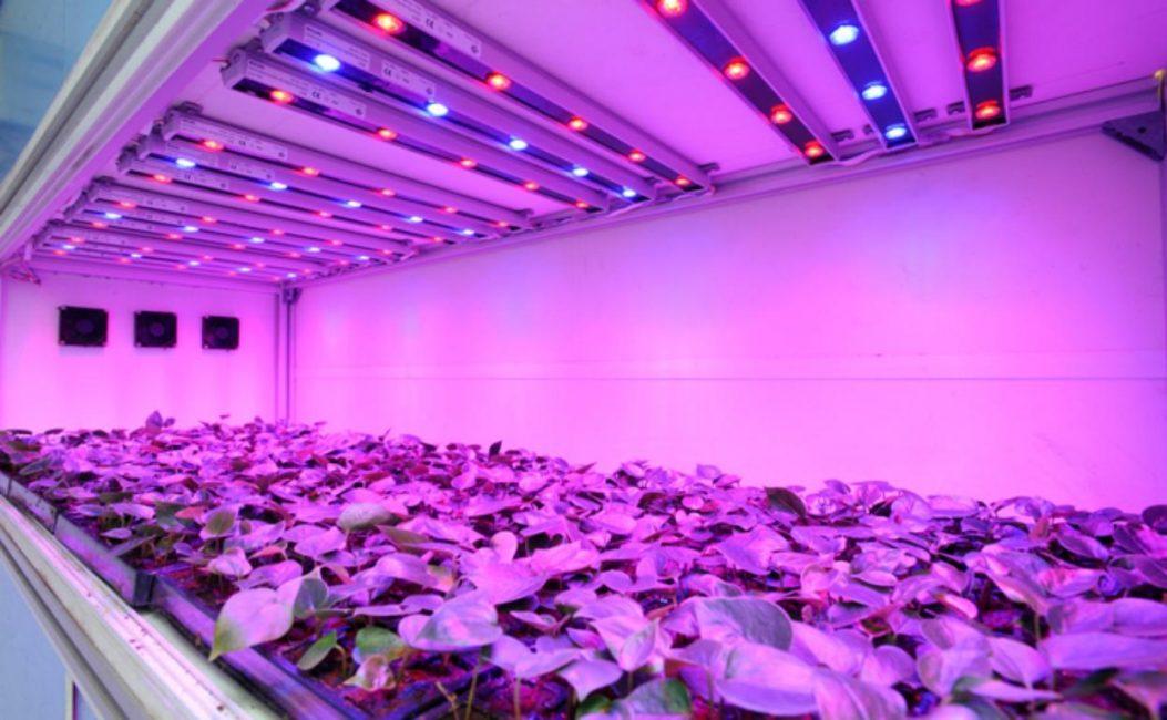 Лампы ускоряют процессы фотосинтеза в листьях растений, способствуя росту и развитию