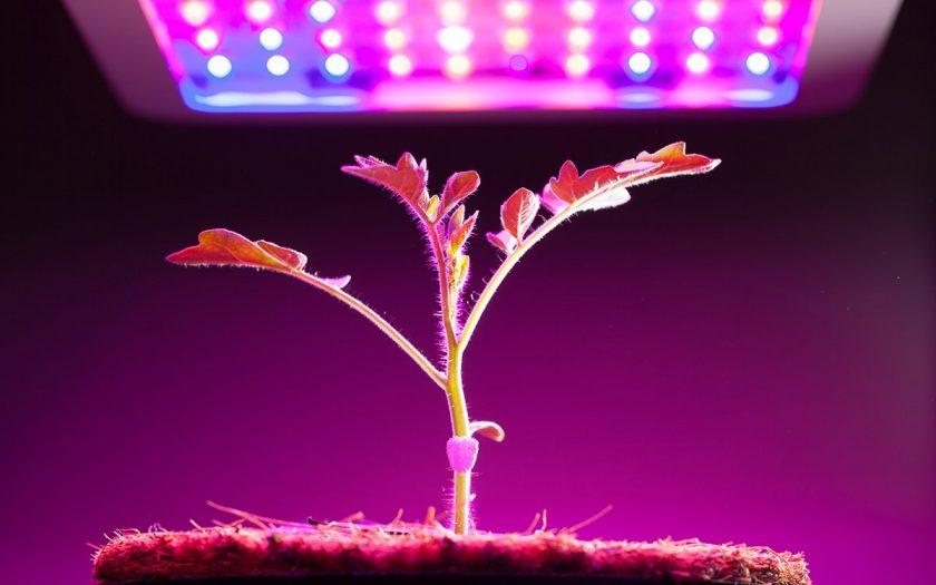 ТОП-10 лучших фитоламп на светодиодах: рейтинг приборов для досветки и выращивания растений дома