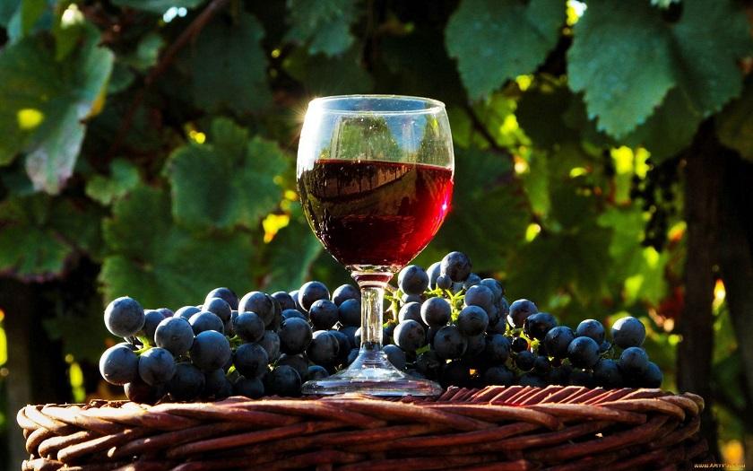 Как поставить вино из винограда дома