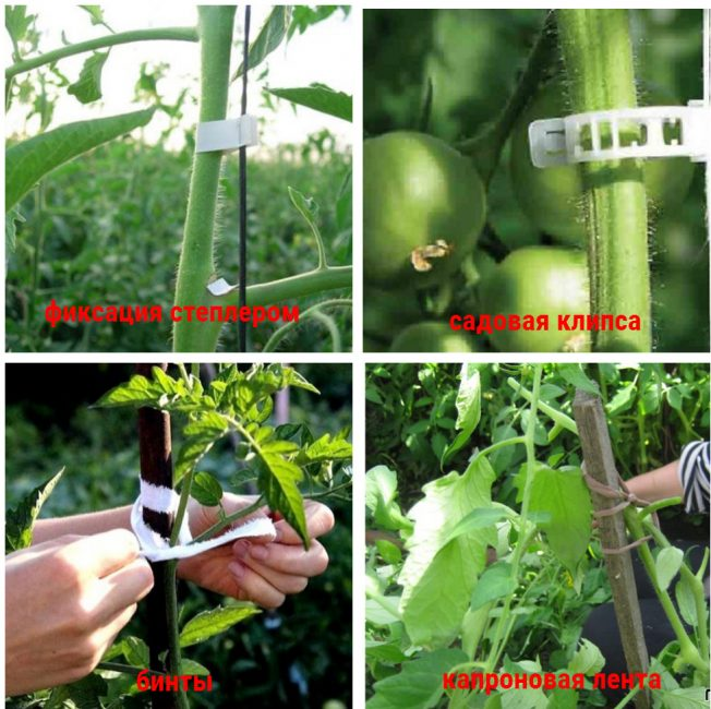 Как подвязать помидоры