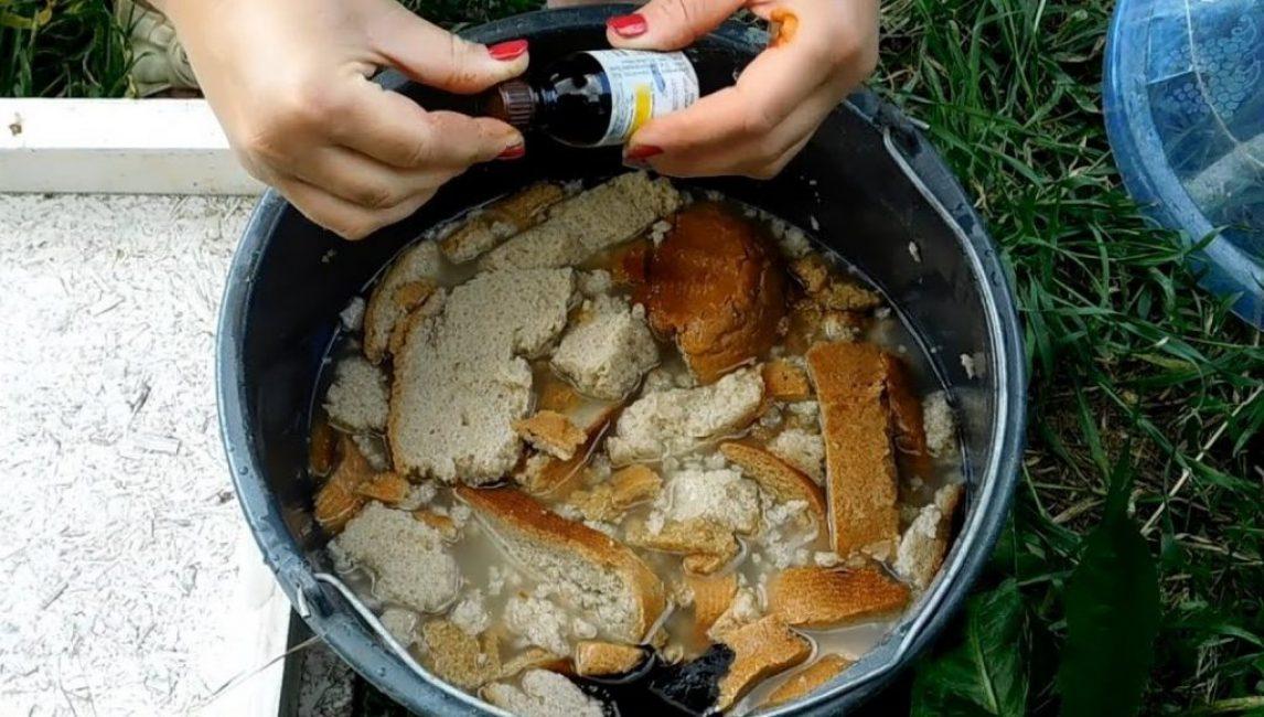 Приготовление хлебной подкормки