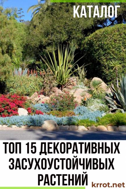 засухоустойчивые растения для сада