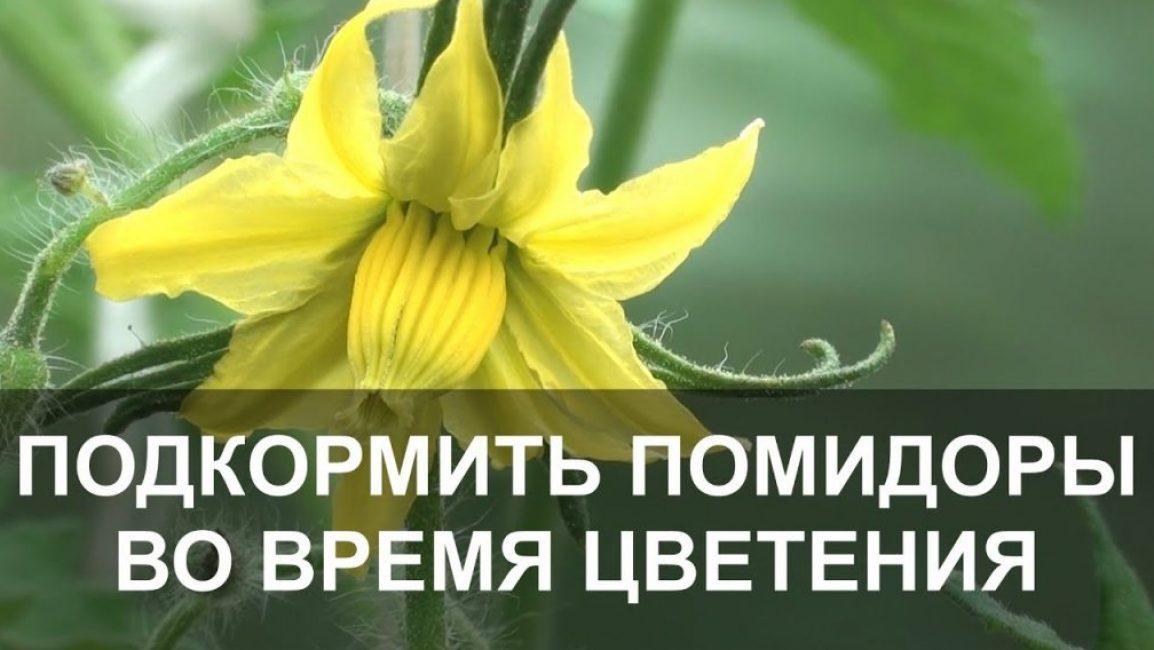 Подкормка при цветении важна