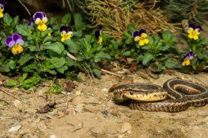 Как навсегда избавиться от змей на дачном участке: причины их появления, действующие средства для борьбы с ними и профилактические меры