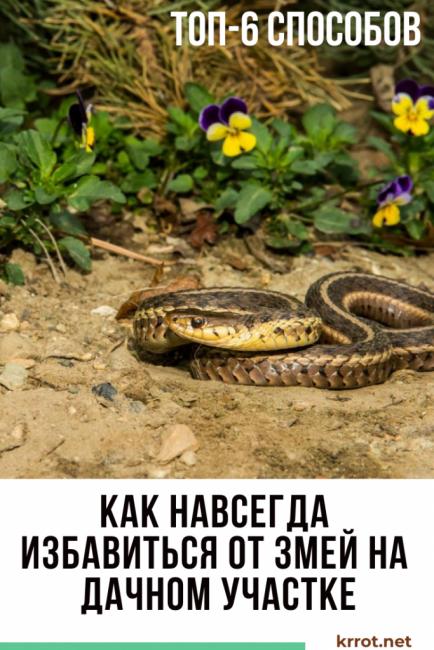 Как навсегда избавиться от змей на дачном участке