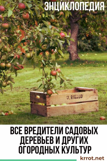 Вредители садовых деревьев