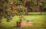 [Энциклопедия] Вредители садовых деревьев и других огородных культур: как определить их и обезвредить | (Фото & Видео)