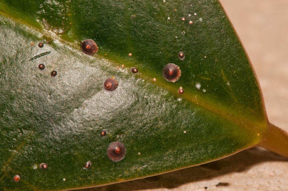 Спатифиллум: ход в домашних условиях, пересадка, размножение (80+ Фото) +Отзывы