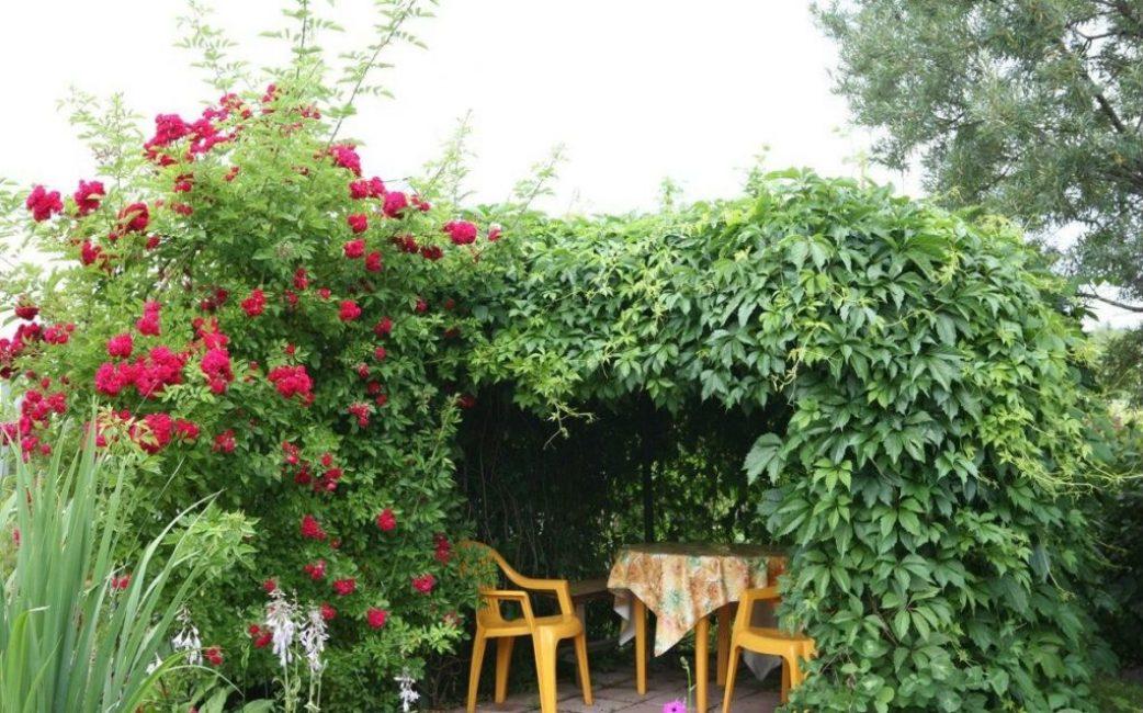 Красивые и неприхотливые растения в оформлении