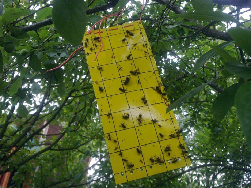 Клеевая ловушка для крупных насекомых