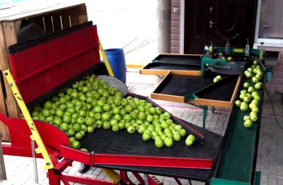 Машины для сортировки яблок