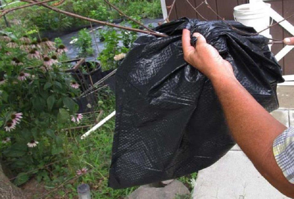 Снятие гнезда с дерева и упаковка его в полиэтиленовый мешок