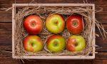 [Инструкция] Как правильно сохранить яблоки на зиму в домашних условиях: изучаем тонкости и возможности | (Фото & Видео)